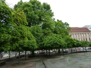 Berlin(2013) 063
