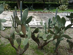 Mexico 063