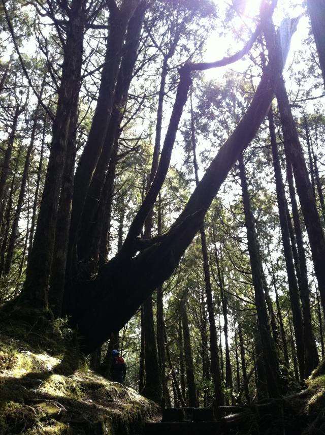 956-太平山 135